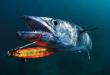 Основи на Шорджигинг риболова